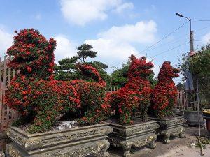 Chăm sóc cắt tỉa cây xanh ở Hà Tĩnh và phương pháp chăm sóc cây