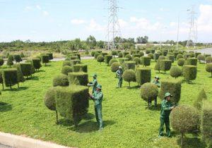 Dịch vụ cây xanh ở Hà Tĩnh dịch vụ cho bạn không gian trong lành